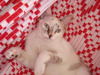 Gata Lili deitada na rede vermelha e branca