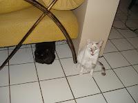 Gata Dóris deitada embaixo do sofá; Gata Lili sentada no chão da sala