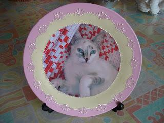 Prato decorativo com a foto da Gata Lili estampada