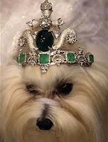 Cão exibe coroa repleta de joias