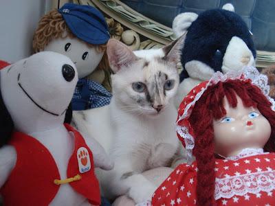 Gata Lili, entre os bonecos de pelúcia da mamãe Renata Góes