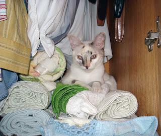 Gata Lili no guarda-roupa