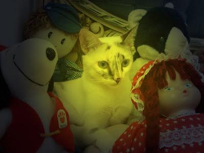 Gata Lili e seus bichos de pelúcia