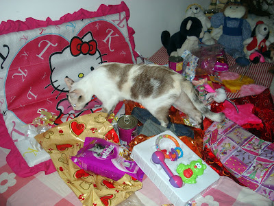 Gata Lili conferindo seus presentes de aniversário