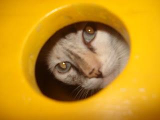 Gata Lili espia pela janela da casinha