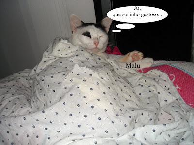 Gata Malu, enrolada no lençol, dorme no telhado da casinha para gatos