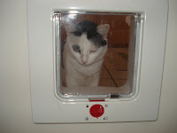 Gata Malu observa a portinhola para gatos, Cat Flap Door
