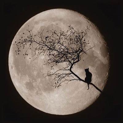 Gato contempla a lua cheia em cima de tronco de árvore