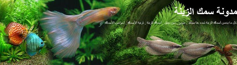 مدونة سمك الزينة