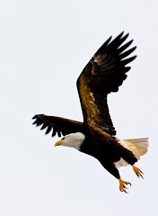 Click on Eagle for Live Cams