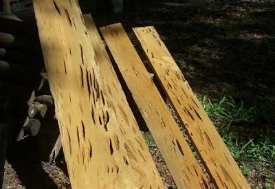 Decorative Cypress Trees