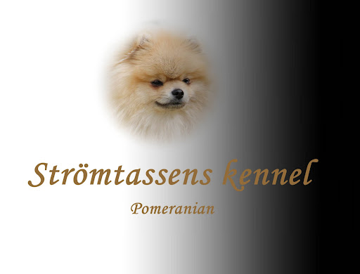 Strömtassens kennel