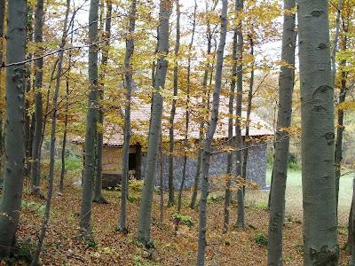 Kapelica hrvatskih mučenika iz šume