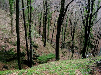 Klisura potoka Grubovnica pored staze 29