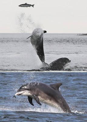 Pertarungan Binatang paling Aneh Sejagat Raya