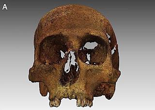 Cráneo de Copérnico - Imagen: PNAS