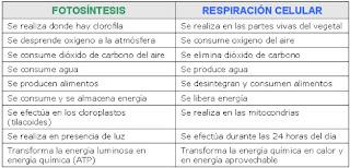 diferencia entre fotosintesis y respiracion celular: