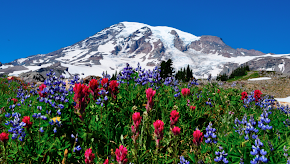 Mt. Rainier Wildflowers Blank Cards