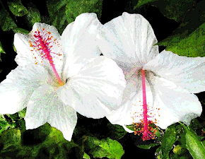 White Hibiscus Watercolor Blank Cards