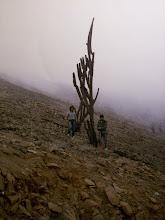 Cactus en la cima