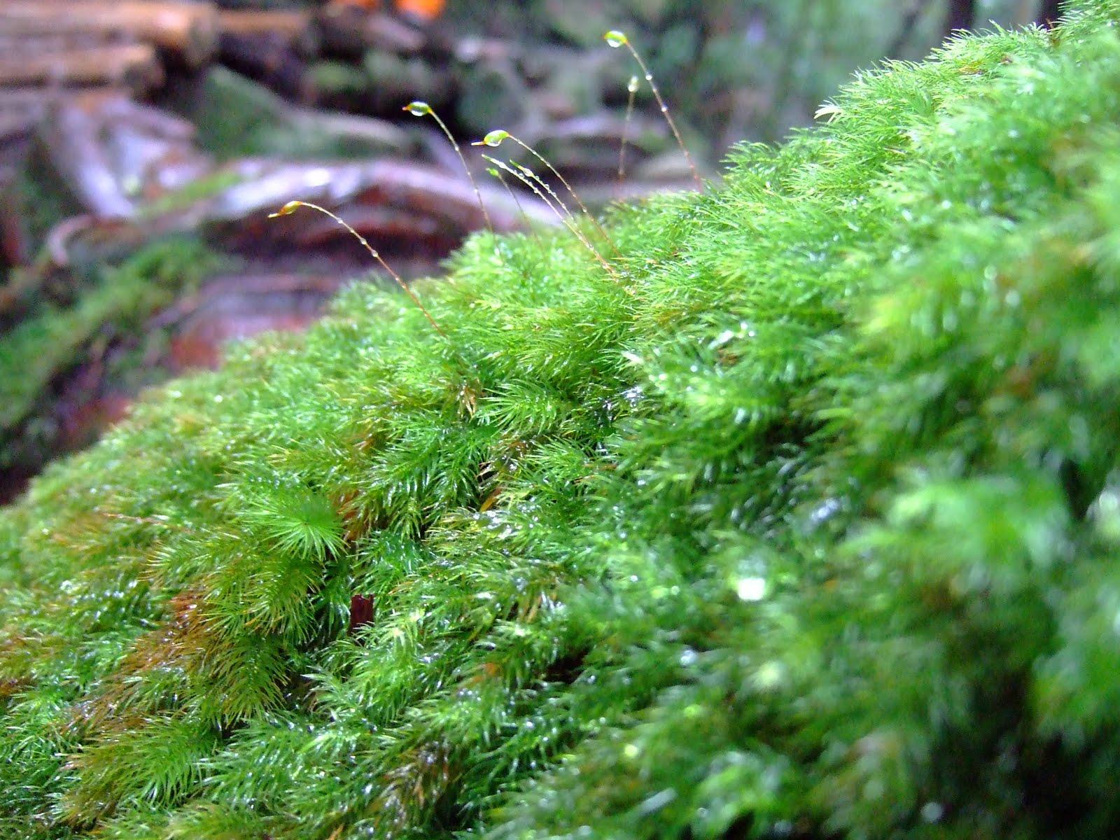 屋久島の森にはおよそ600種が生息しているそう。しかし途中から雲行きが怪しくなり・・・太鼓岩にた