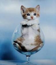 Comelnya kucing ni...