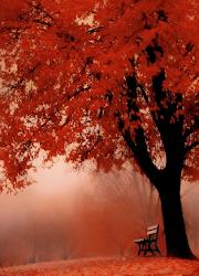 En otoño los poemas