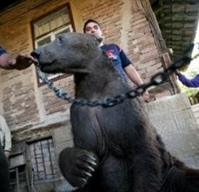 Dancing Bears In Bulgaria - Humane Treatment of Animals Treaty Signed