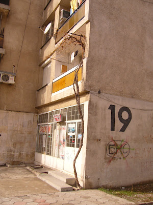 Grapes on the First Floor of Block 19