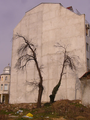 Two Black Trees - One White Wall