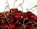 The Cherry Rakia Making Season Soo