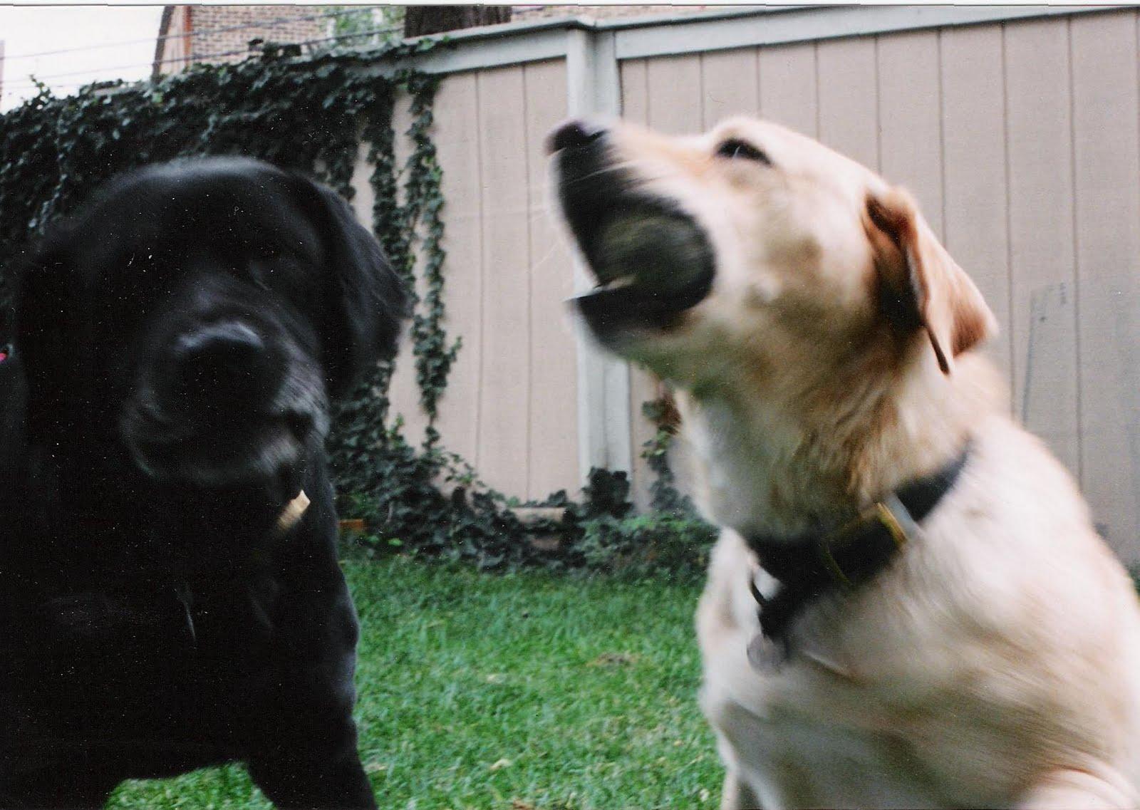 [Ursa,Maxine,ball,play,blur,jpeg]