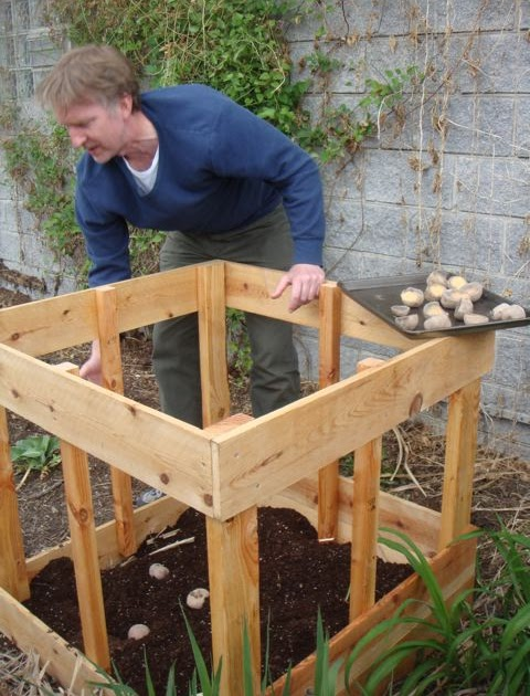 Green Roof Growers Potato Box Update
