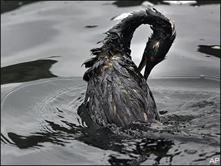 external image 071109_oil_bird.jpg