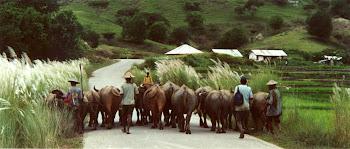 Timor - 2000