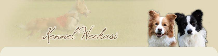 Kennel Weekasi