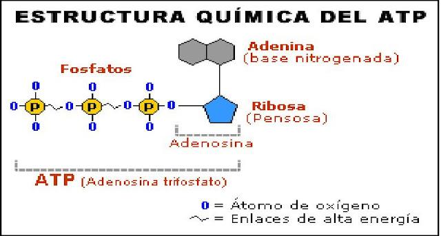 Bioquimica ciencia cotidiana  Bioqumica ciencia cotidiana