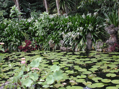 Jehuite c mo identificar plantas ornamentales for Jardin acuatico