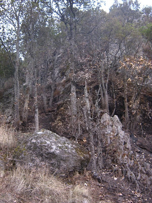 [Castillo] Exterior Bosque-de-encino-quemado