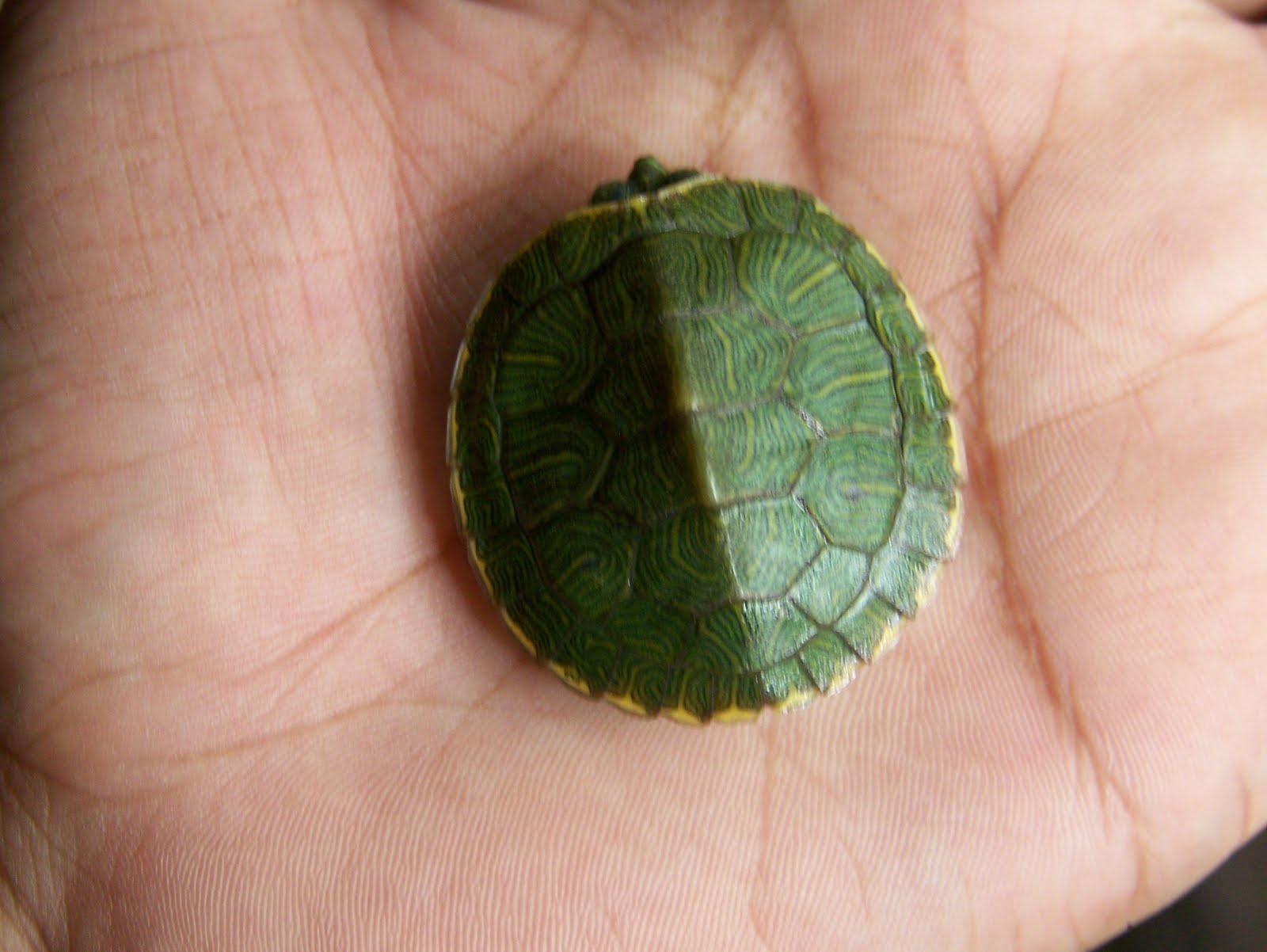 Pet turtle care guide for beginers: July 2010