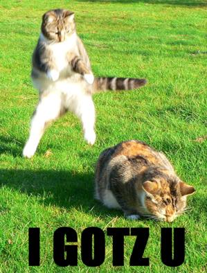 [catts]