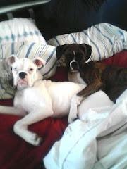 Stella and Polar