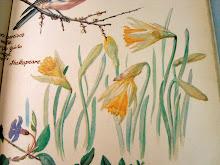 esos narcisos que aún a las golondrinas aventajan,y en flor afrontan al ventoso marzo