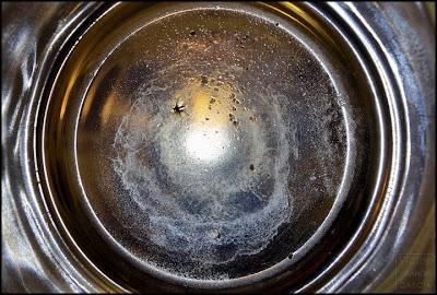 mosquito en vaso