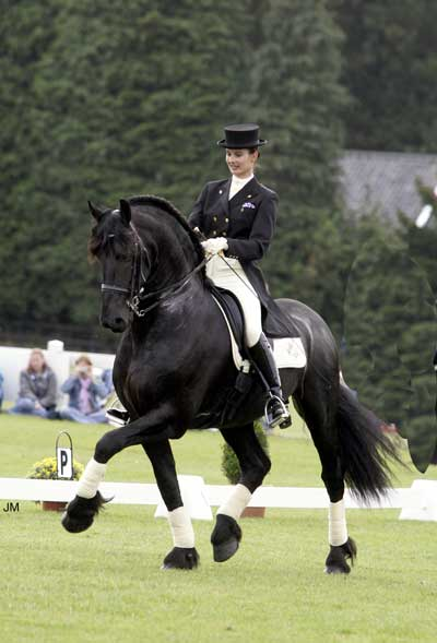 Friesian Horse Stallion. Top Picks; The Friesian Horse