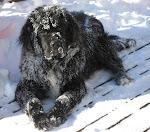 Beardog's Lady Isabella
