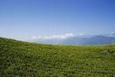 [GRASS.jpg]