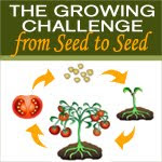 seed to seed