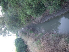 CANAL DE PACHECO
