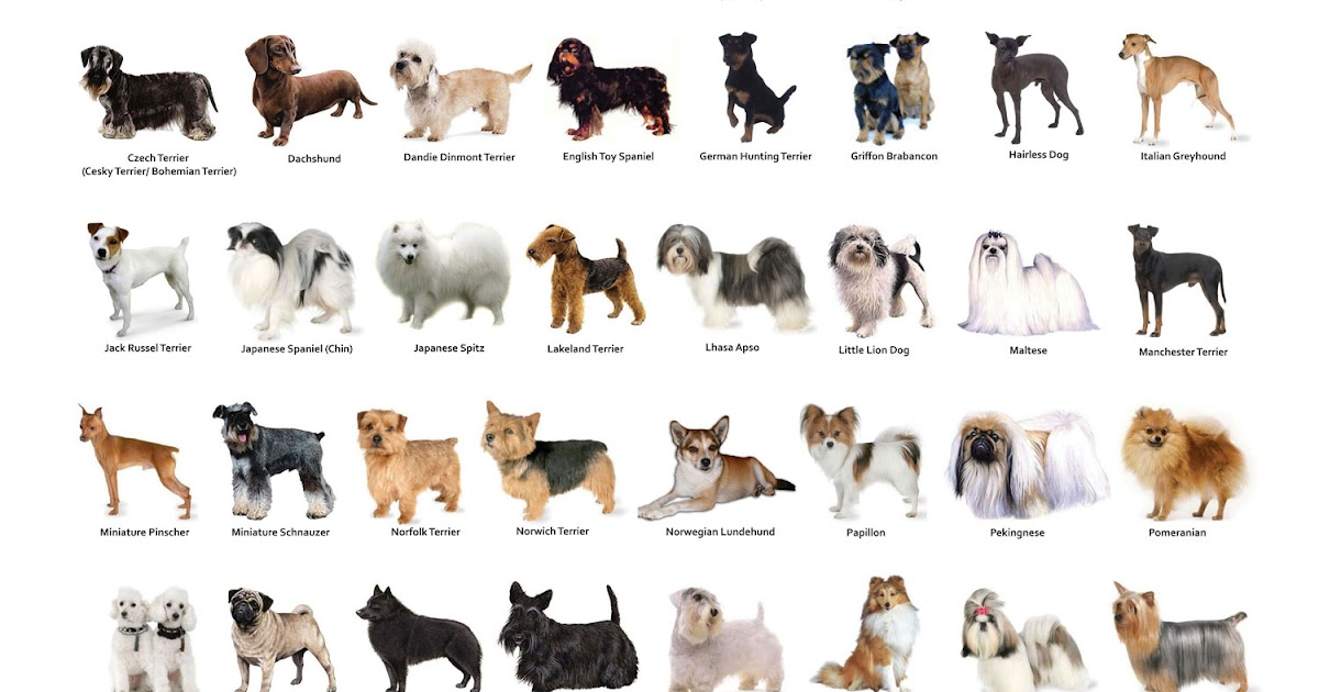 Hdb Approved Dog Breeds Pictures